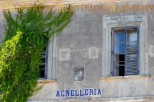 Agnelleria