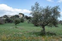 Masseria abbandonata - Urbex Sicily-16